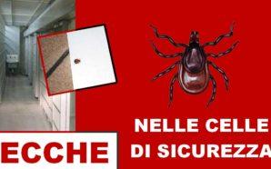NELLE CELLE DI SICUREZZA CON LE ZECCHE